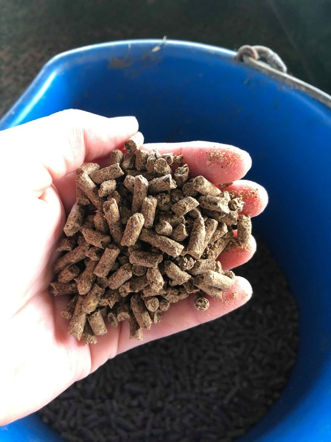 beef cattle complete feed